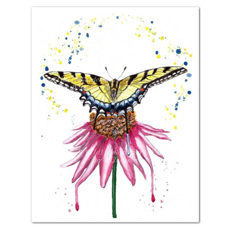 Latest addition to my etsy shop. Swallowtail Butterfly on Coneflower Watercolor Art Print.