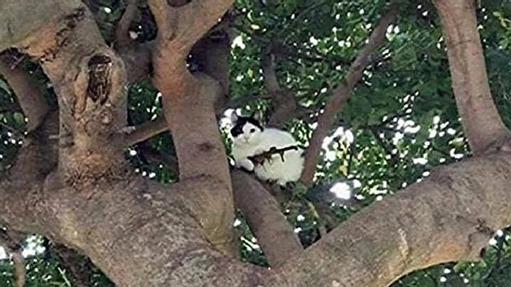 NEWPORT, Ore.  Apparently, someone snapped a photo of a cat in Newport holding a tree branch that looks a lot like a firearm, and the local police took to social media to calm the waters.In a post, the Newport Police Department said they issued the cat a v