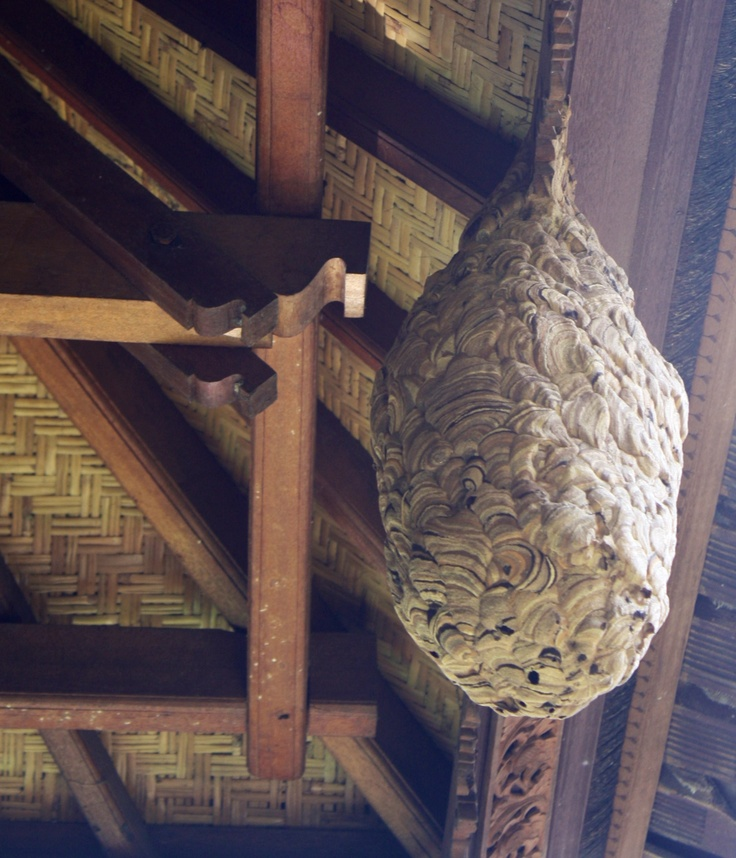 Beautiful wasp nest in Bali