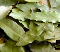 Zázračný bobkový list: Skúste obklady na boľavé kĺby či sirup na kašeľ, odvar na odstránenie solí z tela