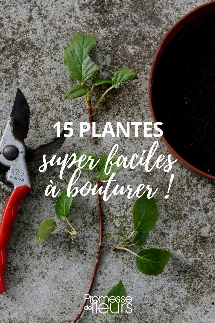15 plantes très faciles à bouturer (avec images) | Arbuste