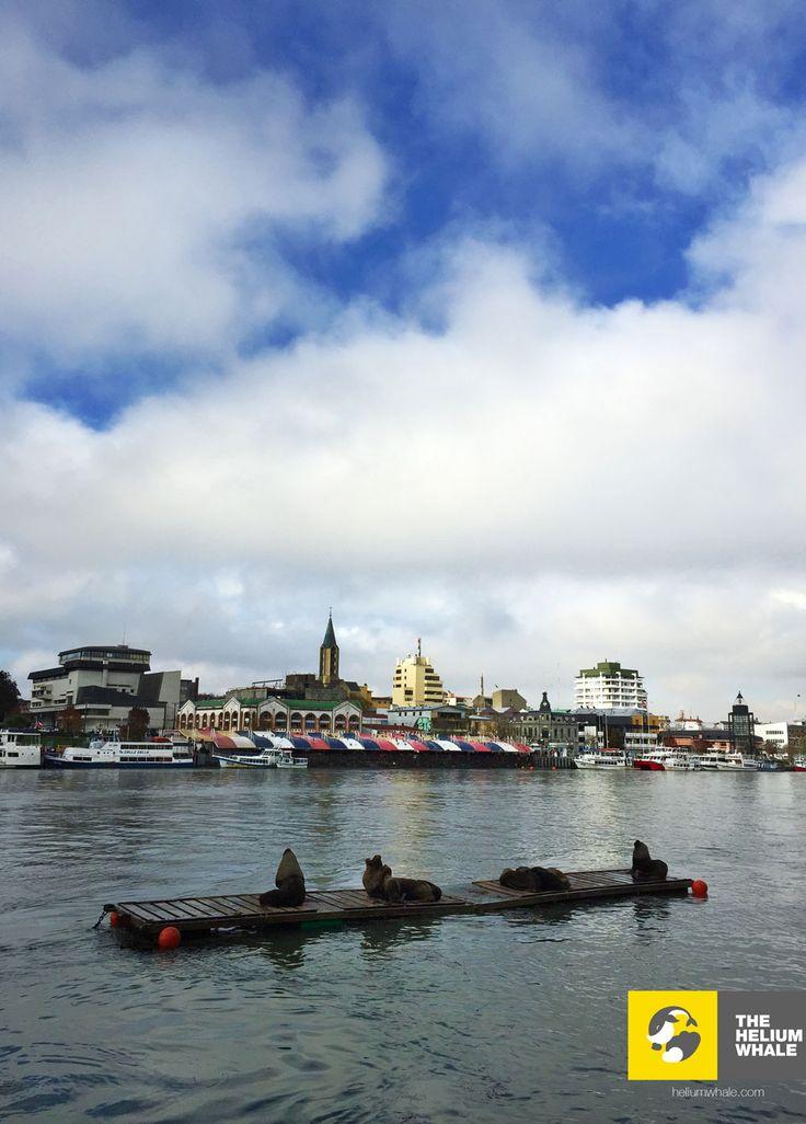 Sea lions and Valdivia