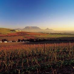 Durbanville winelands - Cape Town