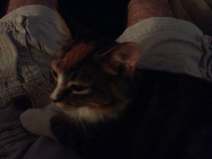 My friends kitten. Everyone loves kittens
