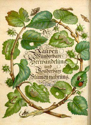 """Letter """"O"""", frontis piece from Der Raupen Wunderbare Verwandlung und Sonderbare 1679. Maria Sibylla Merian."""