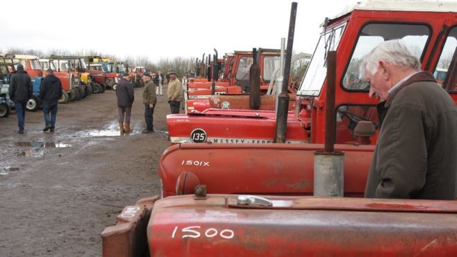 A row of Massey Ferguson tractors at Cheffins' auction in Cambridgeshire
