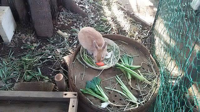 神田森莉 ハムブログ: 太子堂八幡神社の『幸せを呼ぶウサギ』 世界小走り紀行