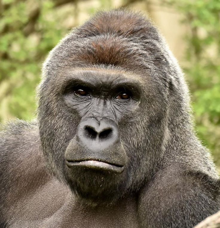 A 4-year-old boy fell into a gorilla enclosure at the Cincinnati Zoo on Saturday. Critics are calling for his parents to be punished after one of the animals was killed.