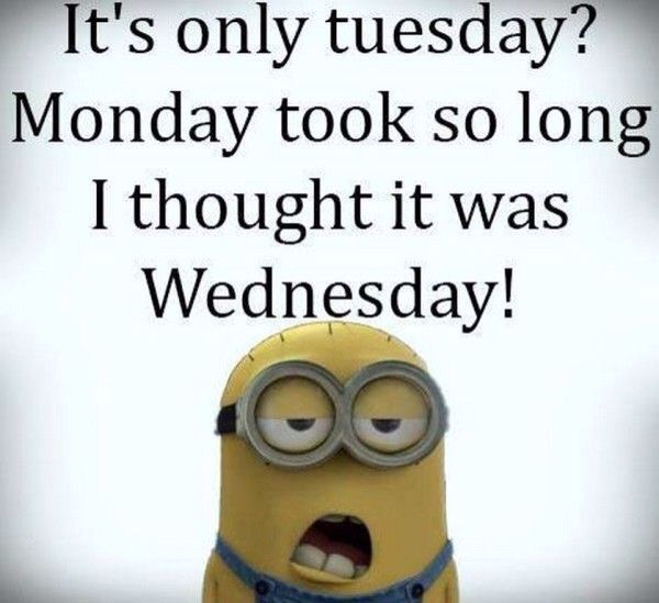 Funny Meme For Tuesday : Best images about tuesday on pinterest meme