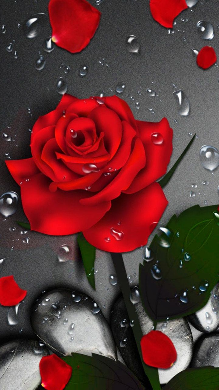 3d Crimson Rose Dew Gravity Theme Has The Cool Red Rose Blossom And Red Petal Green Leaves On Dark Red Roses Wallpaper Flower Phone Wallpaper Flower Wallpaper