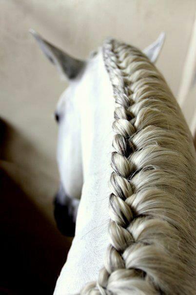 foto - een hele mooie vlecht in de manen van een paardje. deze vlecht heet een hengstenvlecht en ik maak deze vlecht zelf ook heel vaak bij de paarden op de manege.