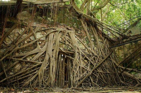É mágico ver a natureza se apropriando desse armazém abandonado