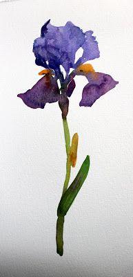Iris - laura's watercolors