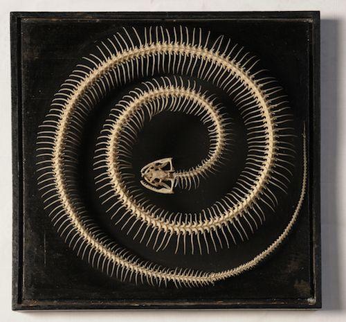 Esqueleto de serpiente. 'Historias Naturales', Museo del Prado