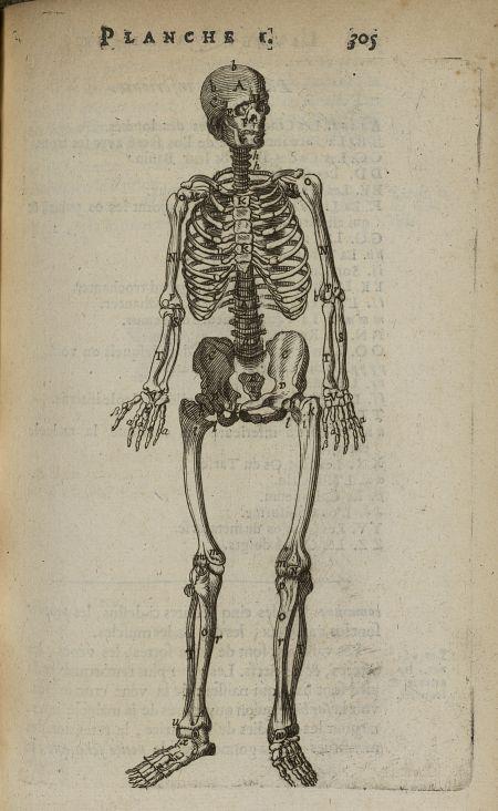les 25 meilleures id es concernant anatomie du corps humain sur pinterest cours anatomie. Black Bedroom Furniture Sets. Home Design Ideas