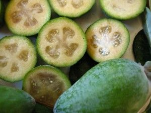 Feijoa fruit is a delicious fruit with lot of health benefits in it. The fruit finds its use in culinary delight in many ways. The yummy, egg-shaped fruit is grown in many parts of the world and is very popular for its taste and nutrition content. It is also commonly known as pineapple guava. Feijoa Distribution  Feijoa originally belongs to Argentina, Paraguay, Uruguay, and Brazil. But nowadays the fruit is also grown in Australia, Chile, Bahamas, France, Israel, India, Jamaica, Italy…