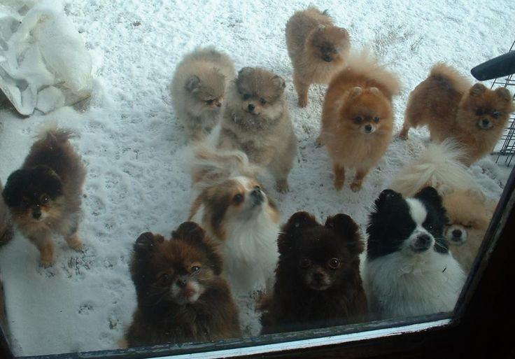 hunder | Valper leilighetsvis til salgs. Ta gjerne kontakt for mer informasjon.