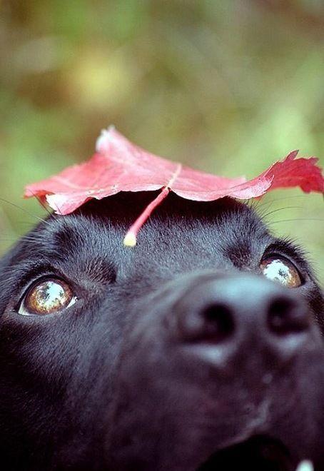 fall......