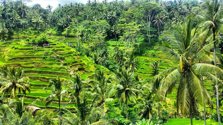 Have you ever intsa-stalked Bali? If the answer is YES, there is a high possibility that you have stumbled upon the Tegalalang Rice Terrace.