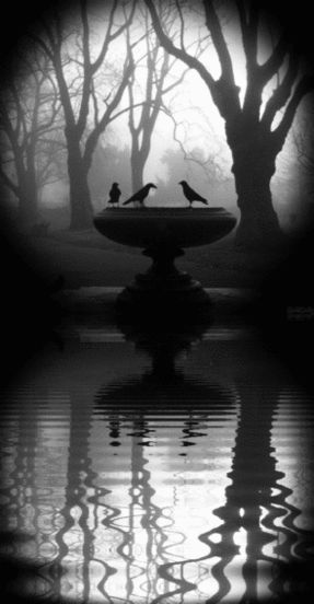 ✝ ╬ ╬ ✝ ╬ ╬ ✝ goth gorgeous ✝ ╬ ╬ ✝ ╬ ╬ ✝ *The Telegraph's online picture editor, David Sim, took this photo of crows perched on a fountain in a foggy Kennington Park