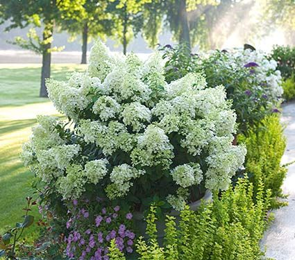 Rule of 3's: 3 plants, 3 textures, 3 colors. Limelight hydrangea in pot with chartreuse foliage and purple flowers...