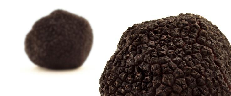 Fresh Uncinatum Black Truffle   Appennino Funghi e Tartufi