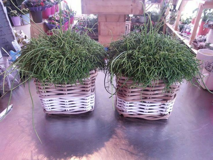 Plantjes in mand