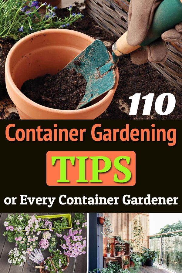 110+ Container Gardening Suggestions You Ever Want To Know