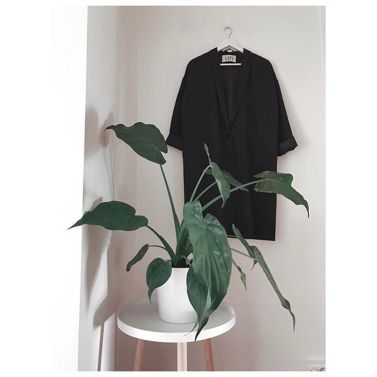 "192 Likes, 6 Comments - ARV (@arvdesign) on Instagram: ""Essentials. - A green plant and a black oversized spring/summer coat.  #elincoat #arvdesign"""