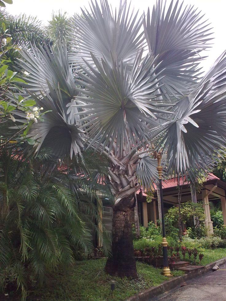 trees palm blue - photo #8