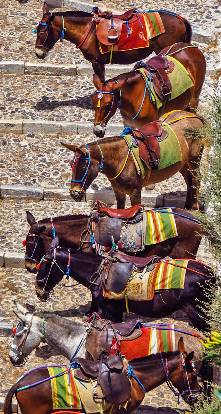 The Mules of Santorini, Greece...  www.oiamansion.com