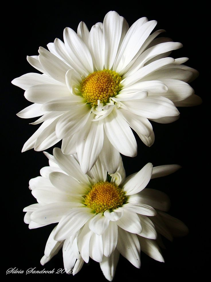 1790 best blooms images on pinterest plants flowers and for Flowers that represent love
