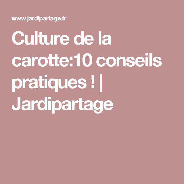 Culture de la carotte:10 conseils pratiques ! | Jardipartage