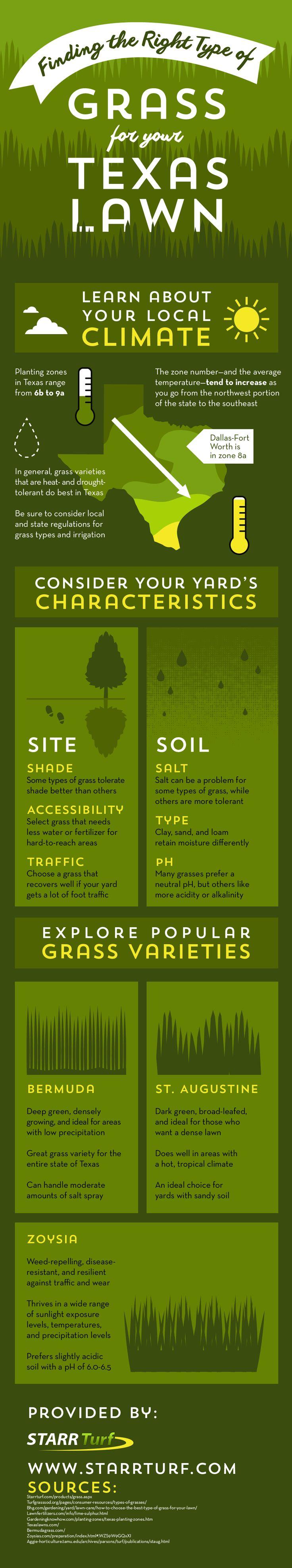 best 25 types of lawn grass ideas on pinterest