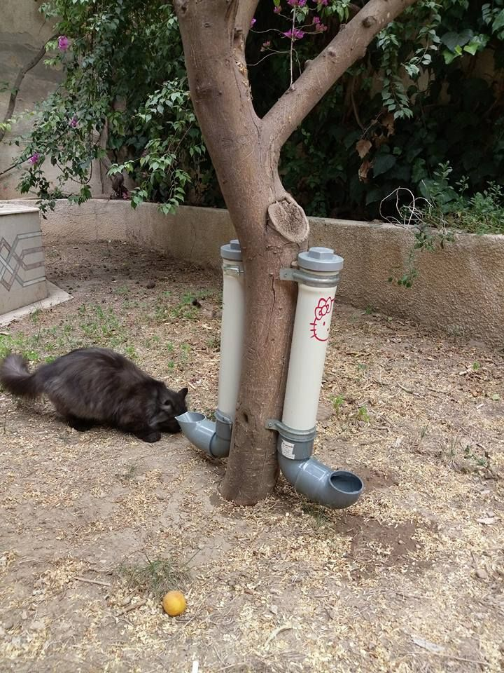 Adding Water Tubes And Dry Food To Feed Stray Cats In Damascus Syria Syriancats Feral Cat Shelter Cat Diy Cat Shelter
