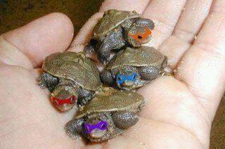Yes!!!: Real Life, Ninjas Turtles, Awesome, Tmnt, Funny, Random, Smile, Teenagers Mutant Ninjas, Animal