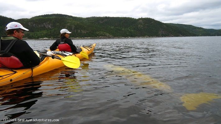 Sea Kayaking & Whale Watching Kayaking with Belugas: Quebec's Saguenay Fjord – Kingdom of the Whales