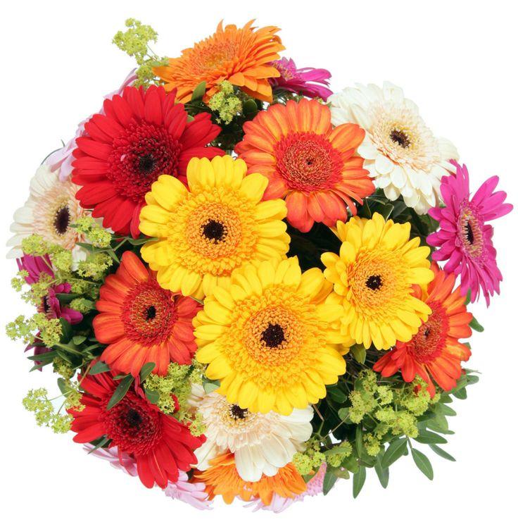 mixed colourful daisy
