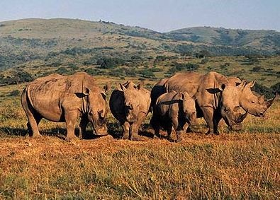 Hluhluwe Game Reserve - South Africa. So amazing to see these animals free in the wild