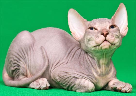 Karmy Sanabelle dla kotów:  http://www.kakadu.pl/Karmy-dla-kotow/karmy-sanabelle-dla-kotow.html