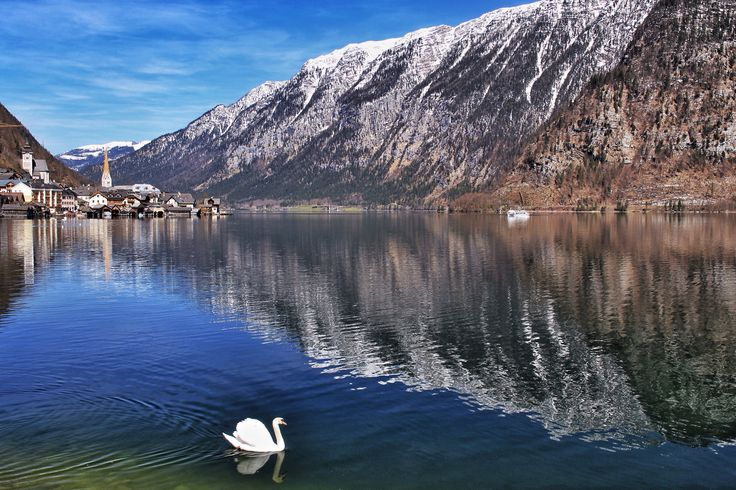 Lonely swan - Hallstatt (Austria)