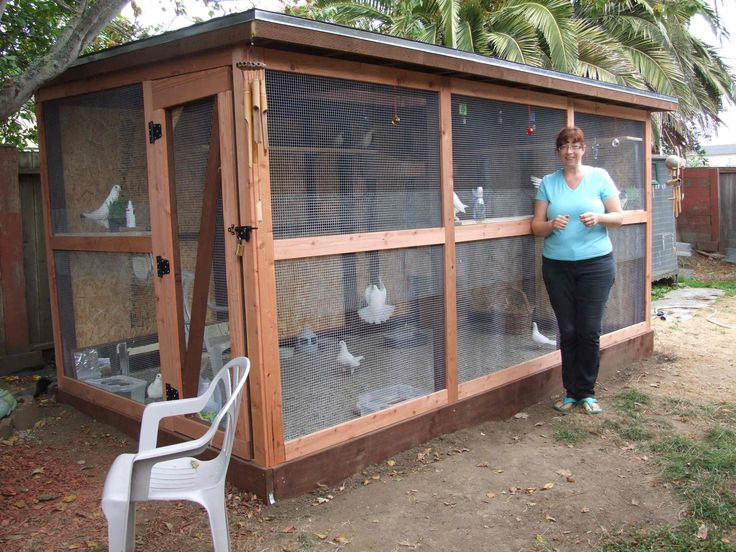 How+to+Build+Pigeon+Cages | Cheryl's aviary keeps her pet and foster pigeons happy & comfortable