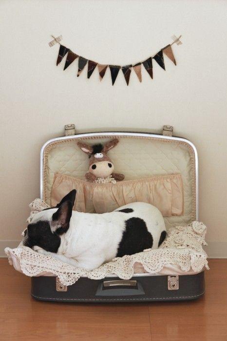 1000 id es sur le th me lits pour chiens valise sur pinterest lits pour chien lits pour. Black Bedroom Furniture Sets. Home Design Ideas