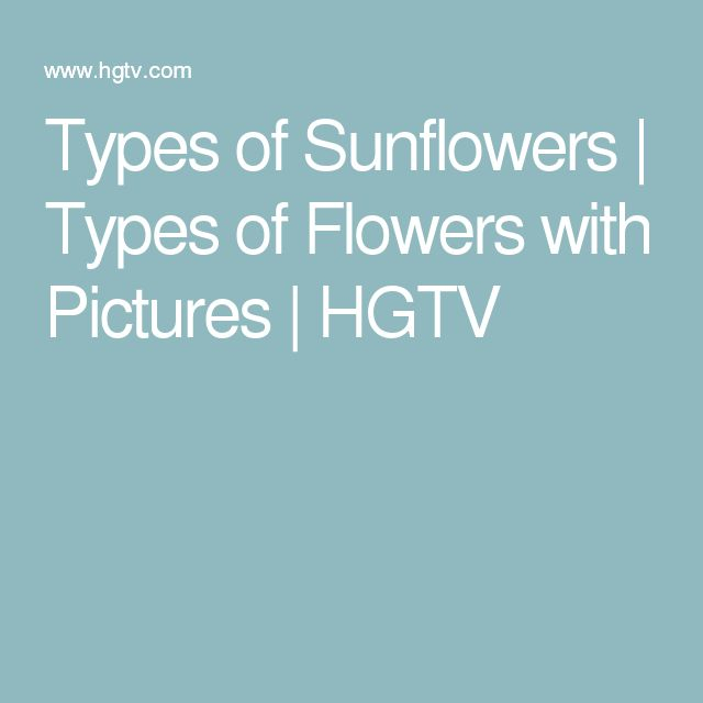 Types of Sunflowers | Types of Flowers with Pictures | HGTV