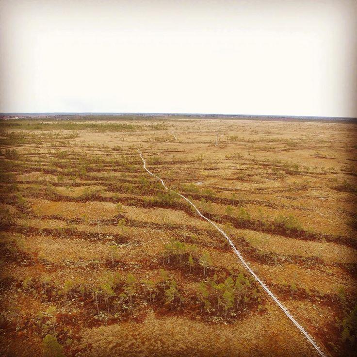 #paukaneva #swamp #suo #seinäjoki #nurmo - Tommi Ritola (@tommyloafer)