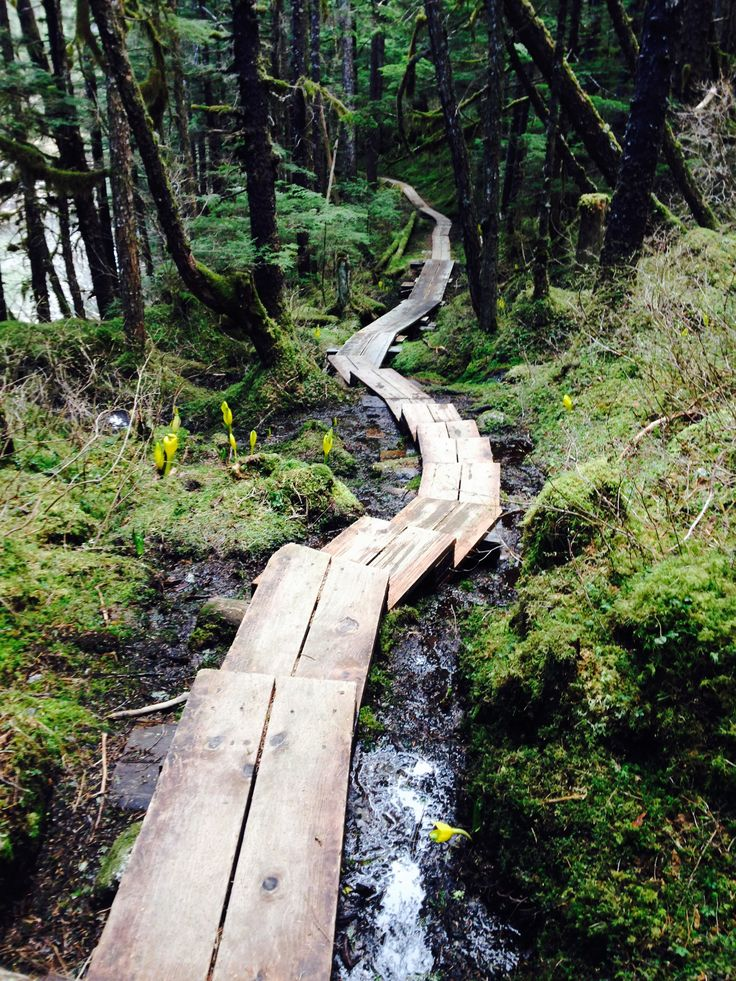 One of the great hiking trails in Juneau, Alaska!