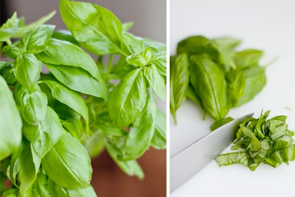How to Freeze Herbs | | The Krazy Coupon Lady