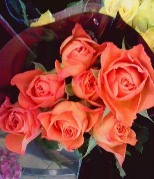 sytě oranžové krásky (90 pieces)