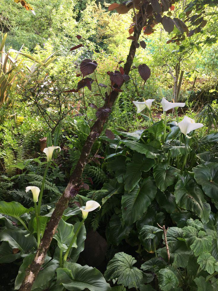 Épinglé sur Jardin Kerfot