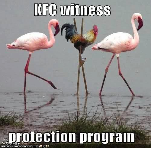 LOL..:): Kfc Witness, Protection Program, Witness Protection, Funny Pictures, Funny Stuff, Humor, Funny Animal, Flamingos, Funnystuff